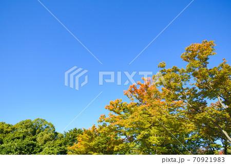 (埼玉県)大宮第二公園駐車場の紅葉と青空 70921983
