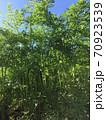 キャロット葉っぱの森 (遠近法にて) 70923539