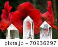 赤いアマリリスの花をバックに水晶の結晶 70936297