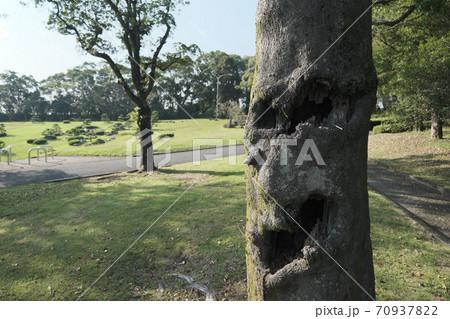 吉野公園にある人の顔をした不気味な木 70937822