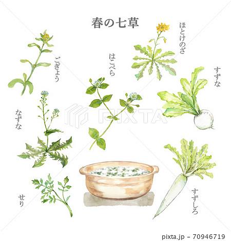 春の七草と七草粥 水彩画 70946719