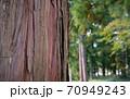 杉の木の皮アップ 70949243