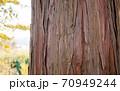 杉の木の皮アップ 70949244