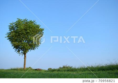 1本の木、青空と地平線(多摩川の風景)。 70956821