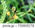 あまり見かけない珍しい花 ハナアロエ 70969578