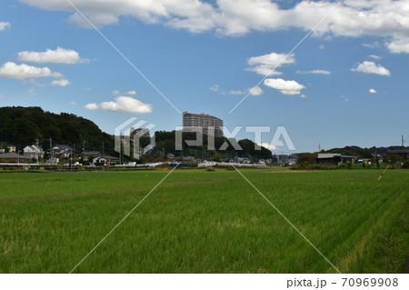 水田の向こうに見える建物 70969908