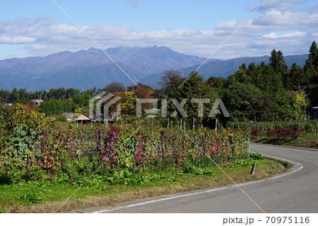 10月 昭和村42武尊山とブドウ畑・奥利根ワイナリー 70975116