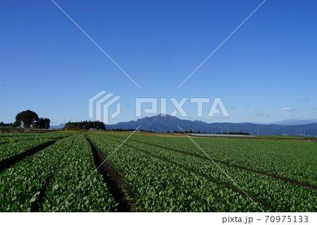 10月 昭和村25子持山と高原野菜畑 70975133