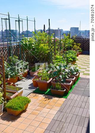 ルーフバルコニーを菜園利用して自給自足 おうち時間を楽しい家庭菜園 70981074
