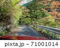 自動車から見る紅葉した道/奥多摩むかし道(東京都) 71001014
