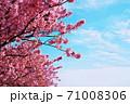 爽やかな春の晴れた日 71008306