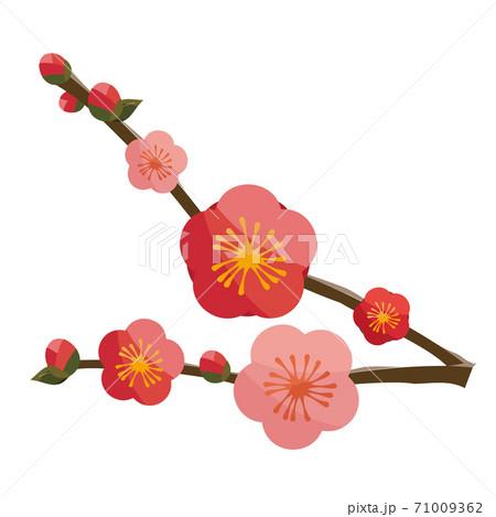 和風の梅の花 赤ピンク 71009362