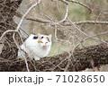 木の上はノラ猫の休憩所 71028650