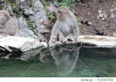 地獄谷野猿公苑の露天風呂に入るサルの親子 71030769