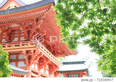 武蔵一宮大宮氷川神社の桜門と緑のモミジ 71036957