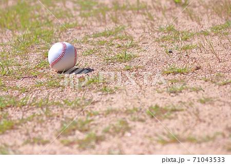 叢の硬式野球ボール 71043533