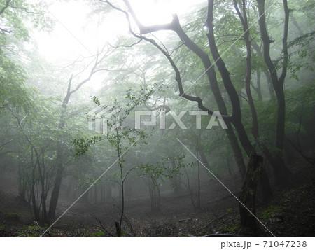 もやの中の幻想的な森 71047238