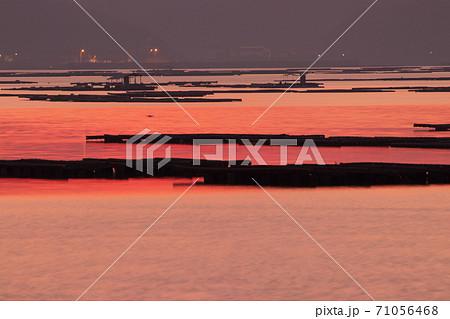 牡蠣筏並ぶ瀬戸内の海が朱色に染まる朝焼け 71056468