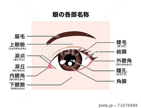 眼・目の周辺の各部名称 ベクターイラスト 71076988