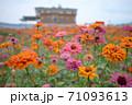 花 フラワー お花 71093613
