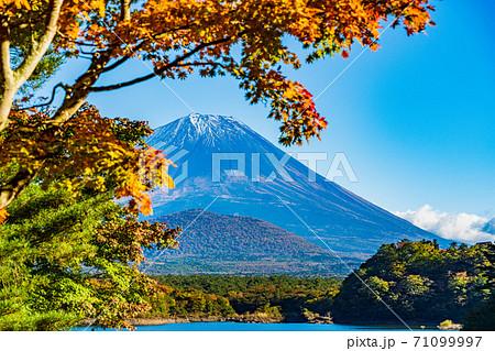 (山梨県)紅葉が始まった精進湖畔 薄雪化粧した富士山 71099997