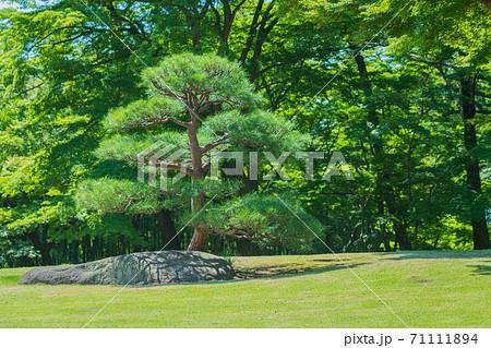 盆栽 松 快晴庭園イメージ 71111894