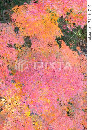 上空から見下ろした鮮やかな紅葉の背景素材 71114710