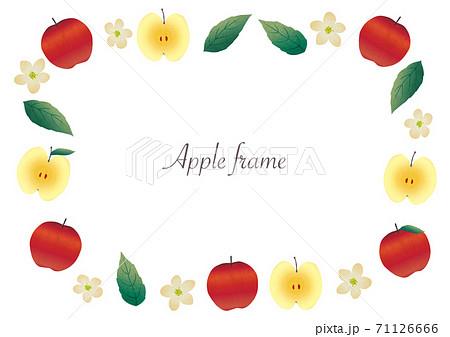 りんごの実・花・葉のイラストフレーム 71126666