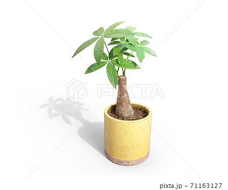 観葉植物のパキラと落ちる影 71163127