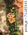 虫食い紅葉葉っぱ 71185545