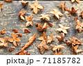 落ち葉と種 71185782