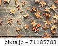落ち葉と種 71185783