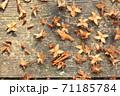 落ち葉と種 71185784