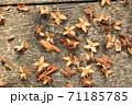 落ち葉と種 71185785