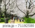 桜-岡山市後楽園 71192580