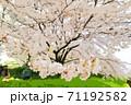 桜-岡山市後楽園 71192582