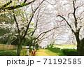 桜-岡山市後楽園 71192585