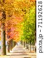 フウ(楓)の紅葉、岡山市運動公園 71192628