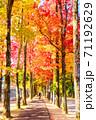 フウ(楓)の紅葉、岡山市運動公園 71192629