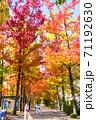 フウ(楓)の紅葉、岡山市運動公園 71192630