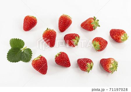 イチゴと苺といちご 71197028