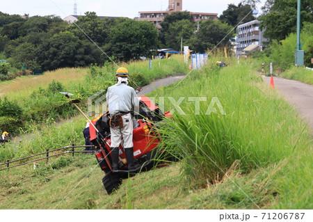 多摩川河川敷の草刈作業 71206787