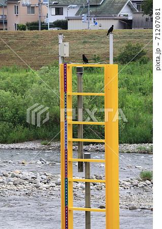 氾濫監視用多摩川水位計 71207081
