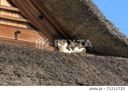 屋根で気持ちよくうたた寝する猫 71211720