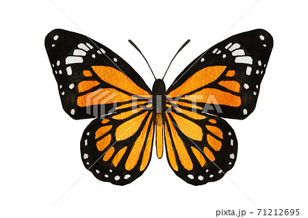蝶々 71212695