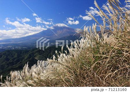秋の丹沢大野山 ススキ越しの富士山 71213160