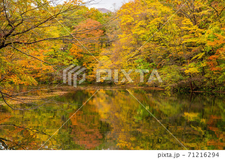 世界遺産白神山地の秋 紅葉の十二湖 王池 71216294