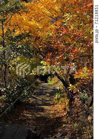 韓国岳から大浪池へ下る登山道の黄金のトンネル 71218851