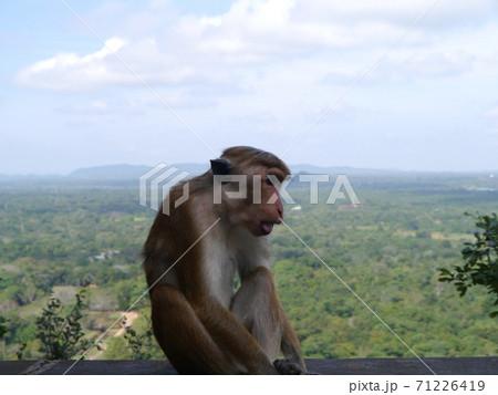 スリランカの観光地シギリアでポースをとるサル 71226419