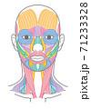 顔と首回りの筋肉 口角挙筋の追加 名称なし 71233328